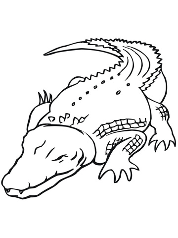 360x480 Australian Saltwater Crocodile coloring page Free Printable
