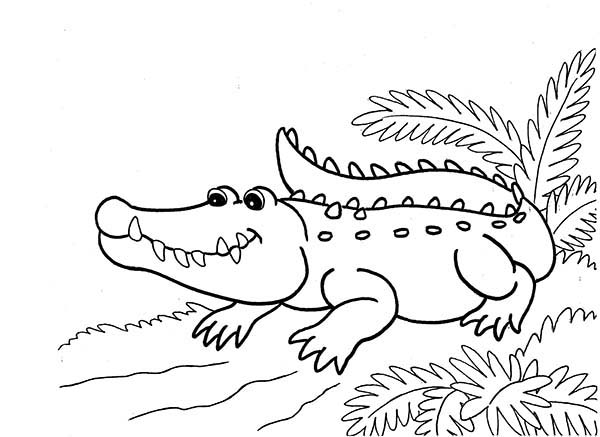 600x437 Crocodile Waiting On Riverside Coloring Page Coloring Sun