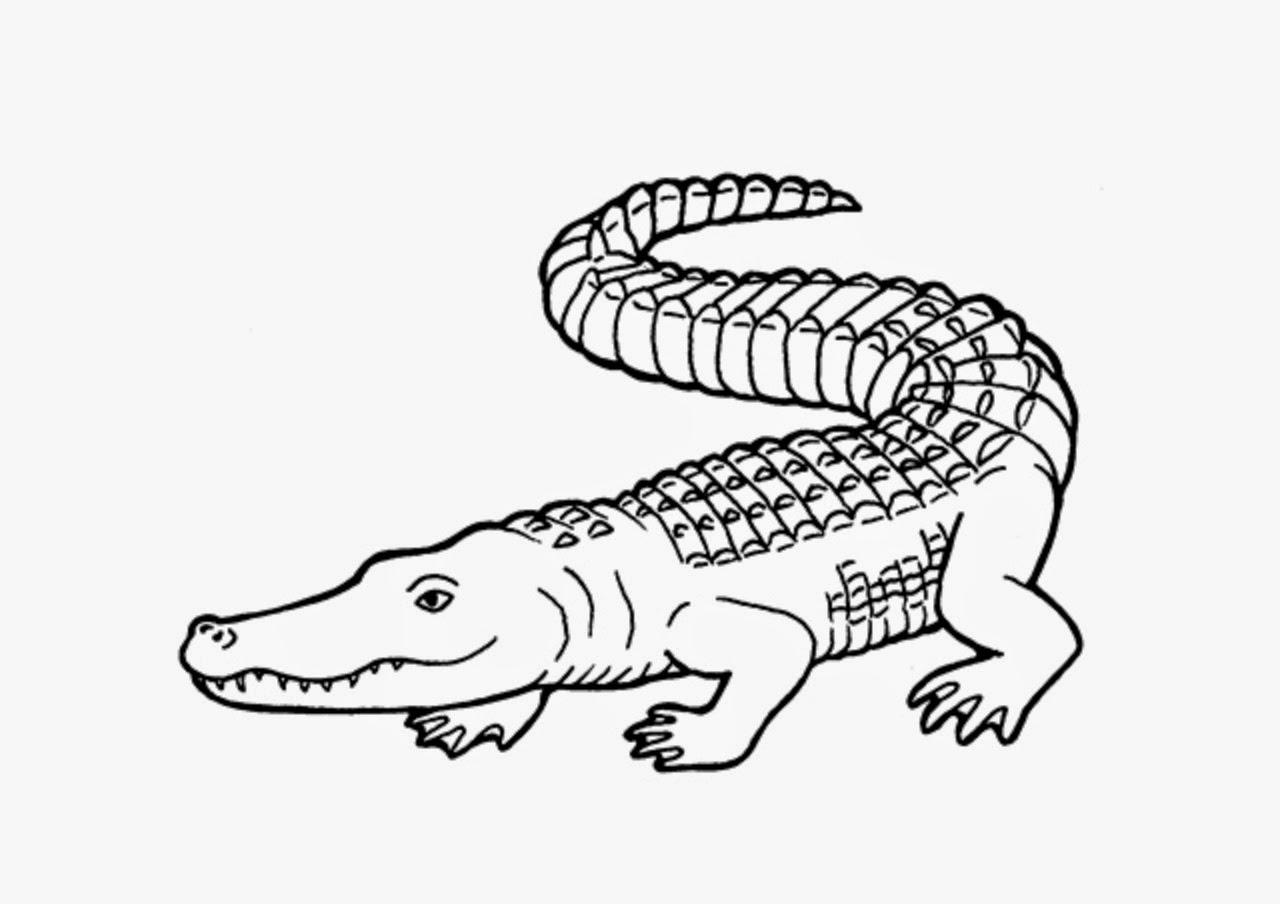 1280x904 Crocodiles Colour Drawing Hd Wallpaper Proyecto Los Anfibios Y