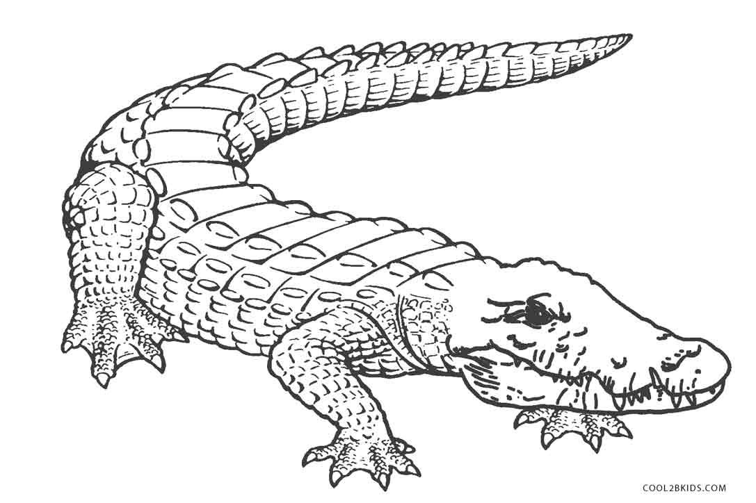 1087x724 Free Printable Alligator Coloring Pages For Kids Cool2bKids