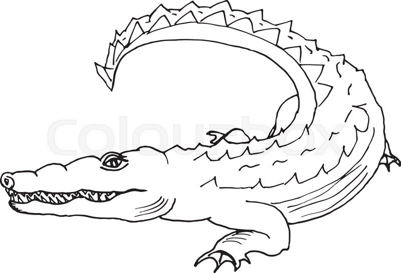 800x546 Hand draw a crocodile style sketch on a black and white background