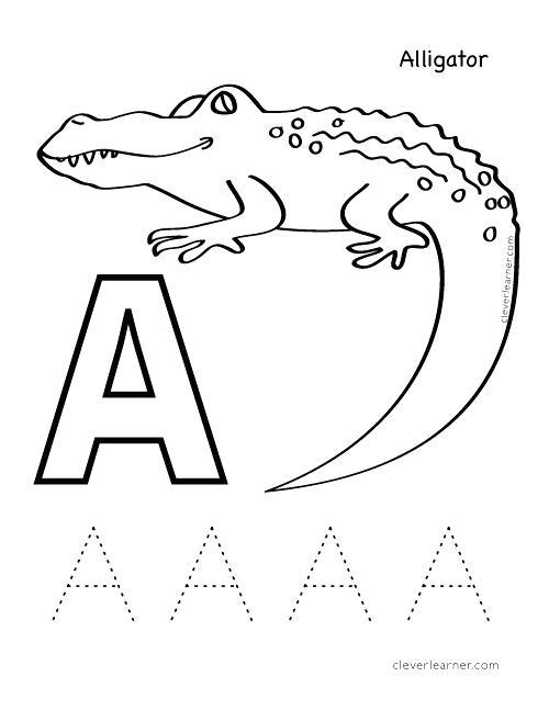 500x647 Alligator Coloring Book Genesisar.co