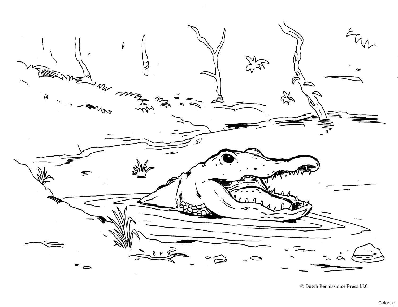 1500x1159 Alligator Coloring Pages 02 Sheet 13f Sheets Preschool Cute Diaiz