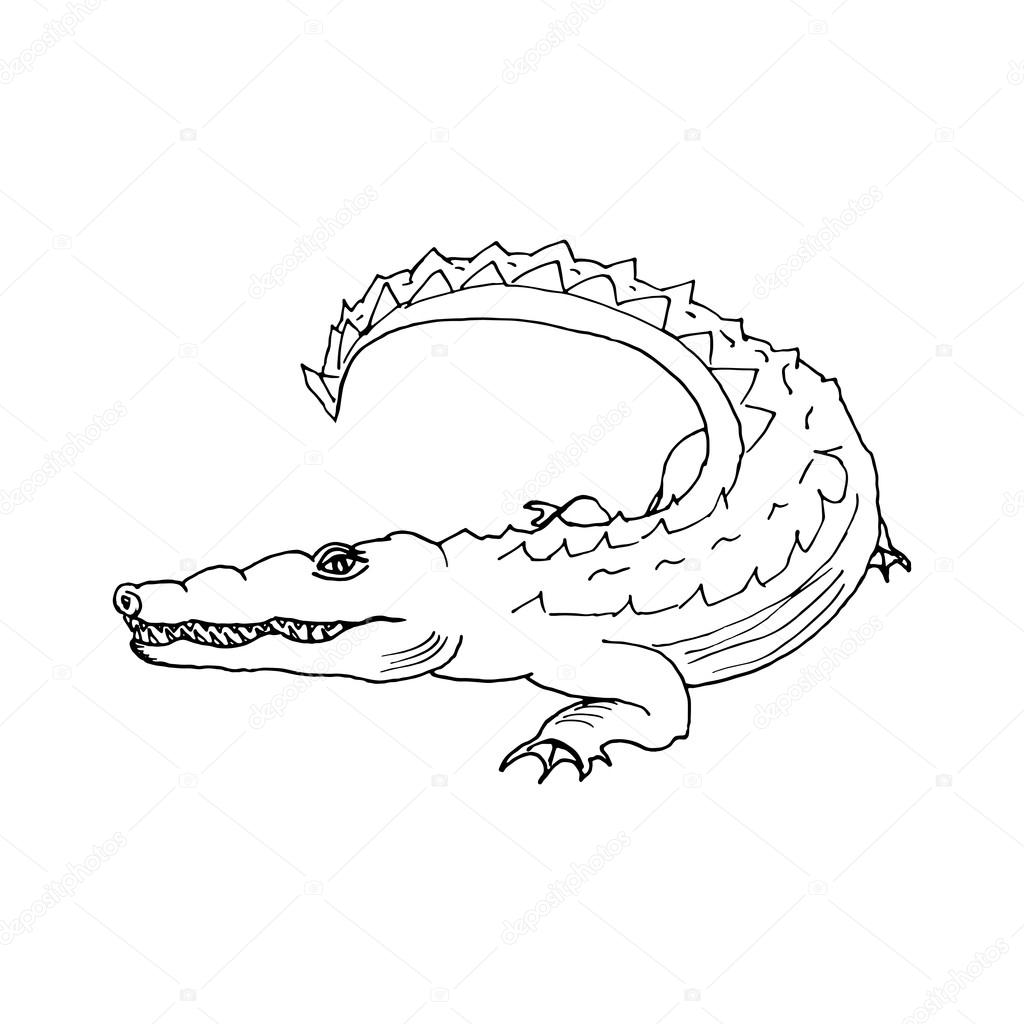 1024x1024 hand draw a crocodile style sketch — Stock Vector