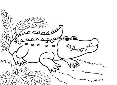 480x349 Alligator Coloring Pages For Kids Image Alligators