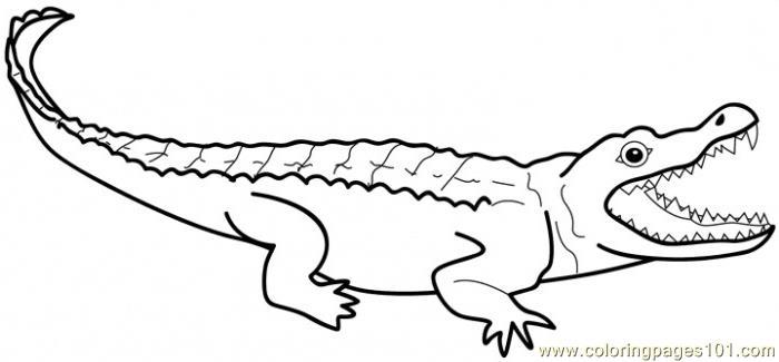 700x325 Alligators Coloring Page