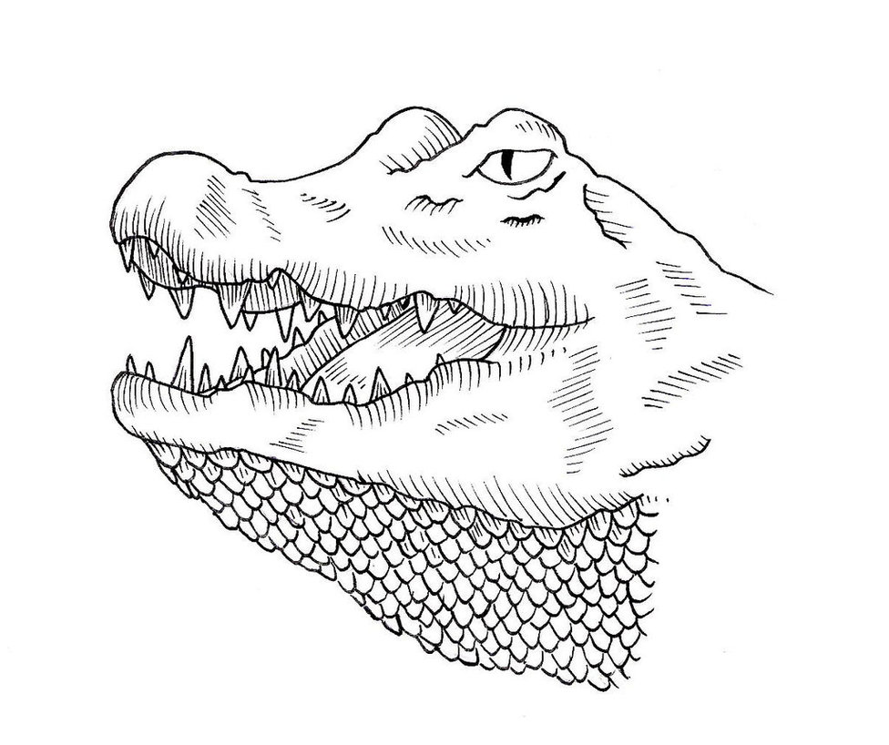 976x818 Antique Alligator Tattoo Design By Jim Cacciabando Jr