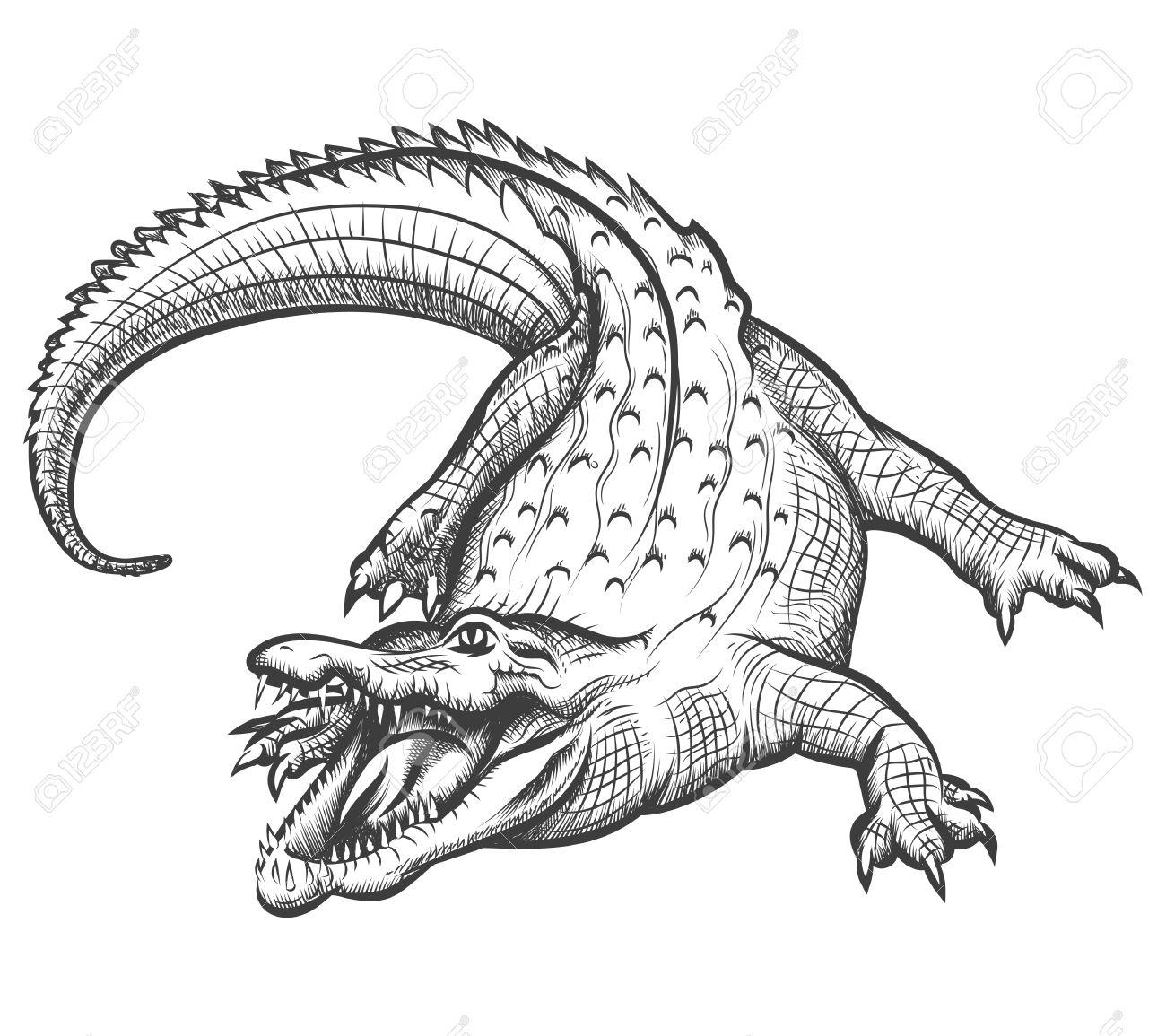 1300x1155 Drawn Alligator Reptile