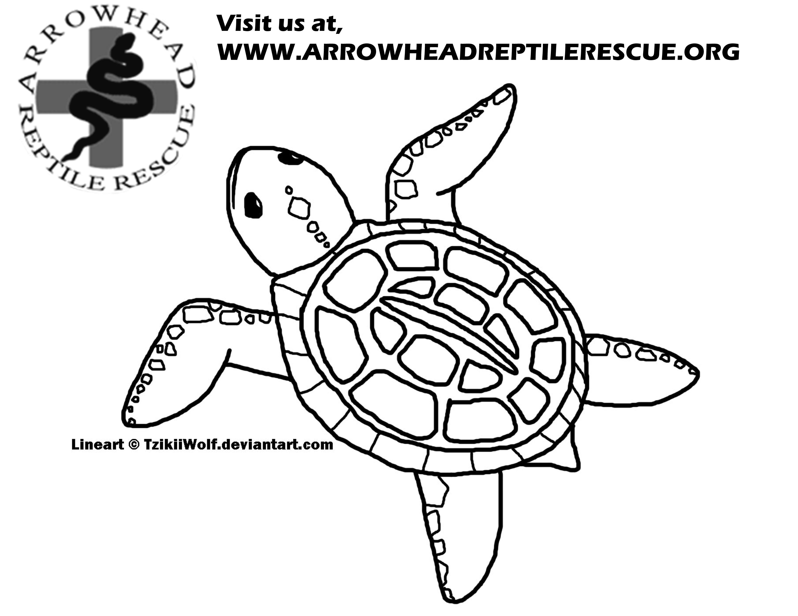 3300x2550 Arrowhead Reptile Rescue