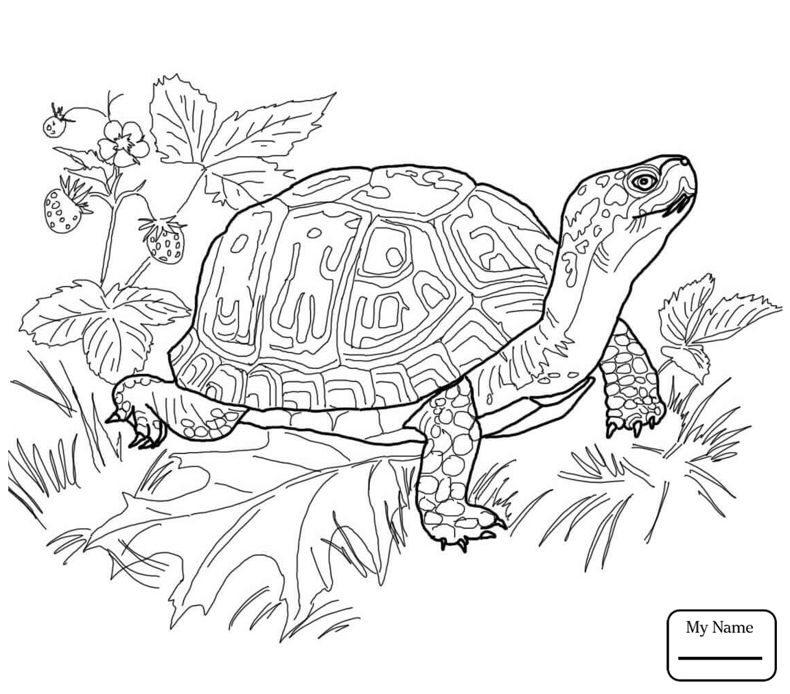 1151x1011 coloring pages common snapping turtle reptiles turtles