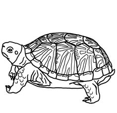 236x228 snapping turtle coloring pages alligator snapping turtle