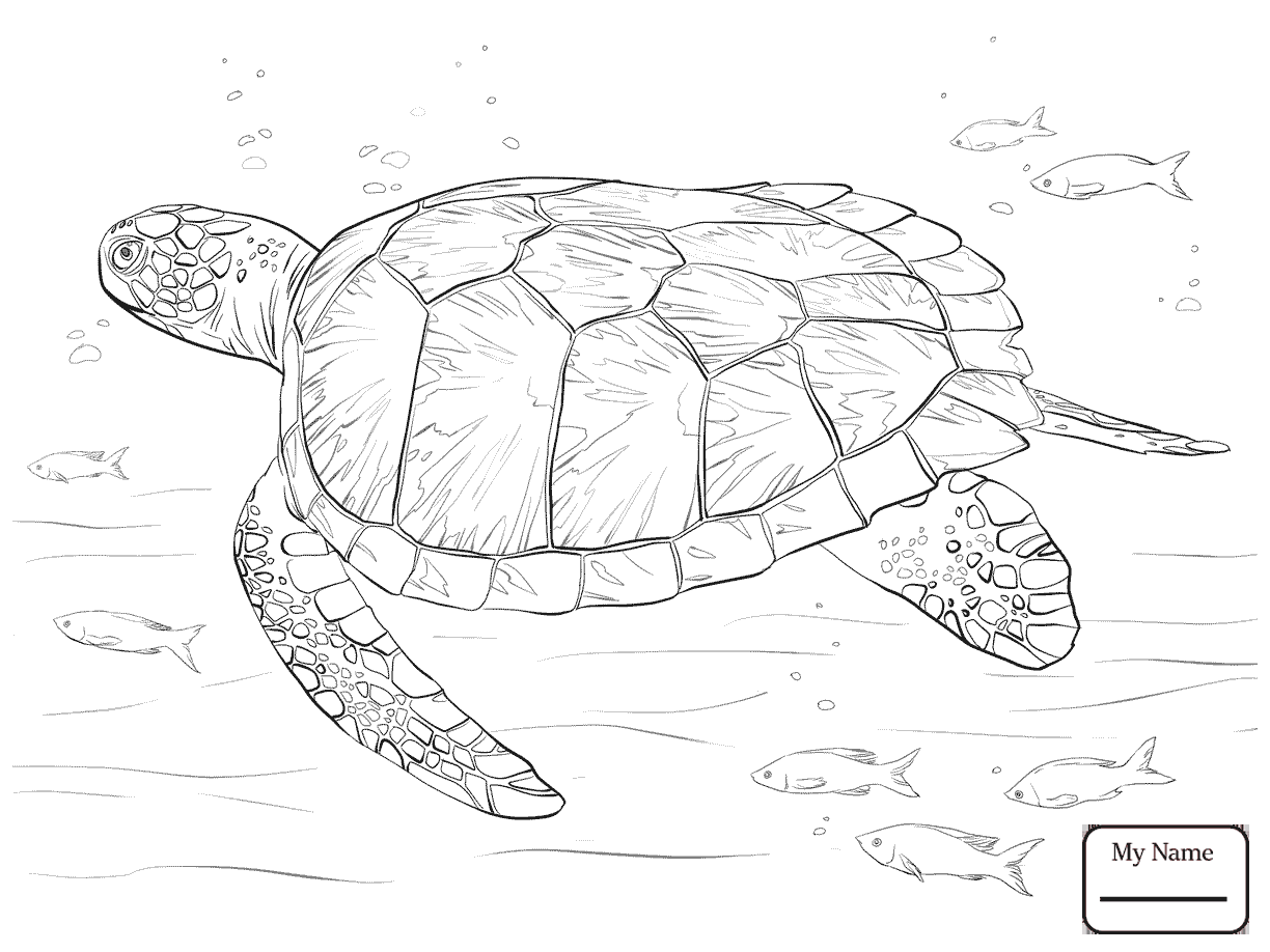 1224x918 turtles reptiles alligator snapping turtle coloring pages for kids