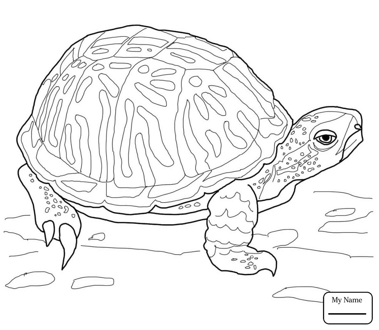 1224x1065 alligator snapping turtle coloring page coloring page for kids