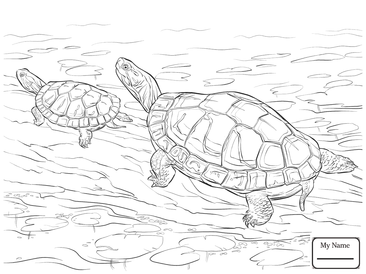 Alligator Snapping Turtle Drawing at GetDrawings.com | Free for ...
