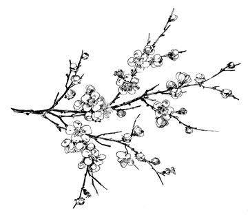 360x312 Almond Blossom Tattoos Almonds, Tattoo And Tatting
