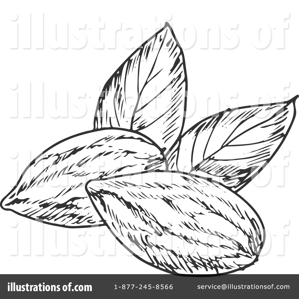 1024x1024 Almond Clipart Black And White