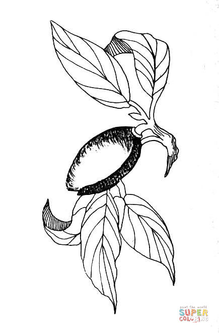 435x661 Almond Coloring Page Free Printable Coloring Pages