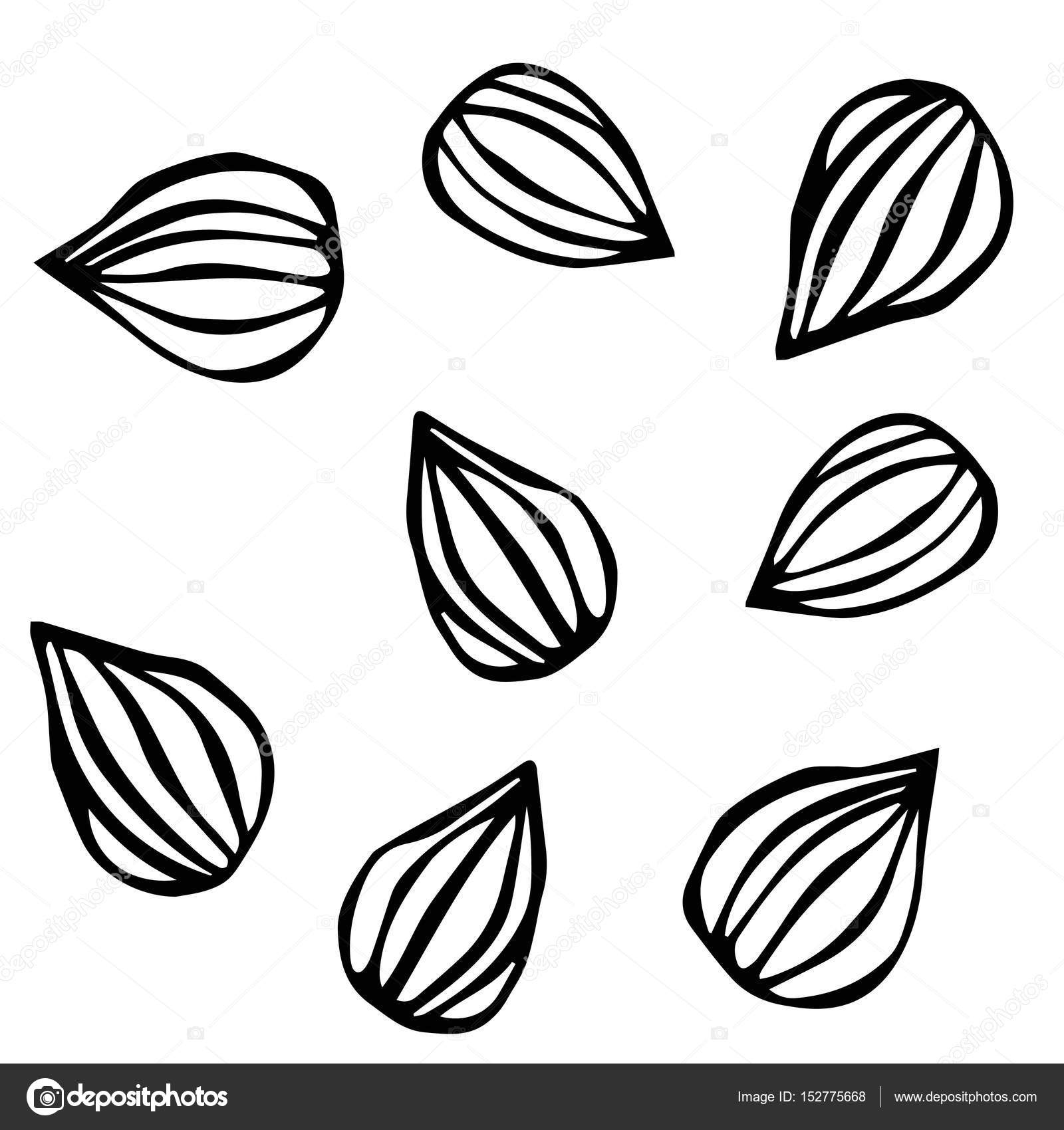 1600x1700 Almond. Doodle Style Vector Background, Isolated On White. Stock