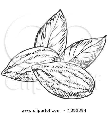 450x470 Clipart Of Black And White Sketched Almonds
