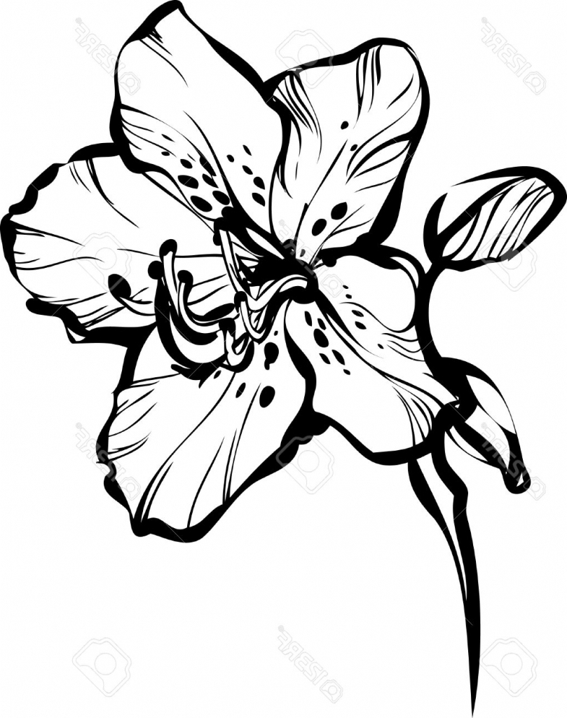 809x1024 Drawing Five Different Beautiful Flower Almond Tree Grows
