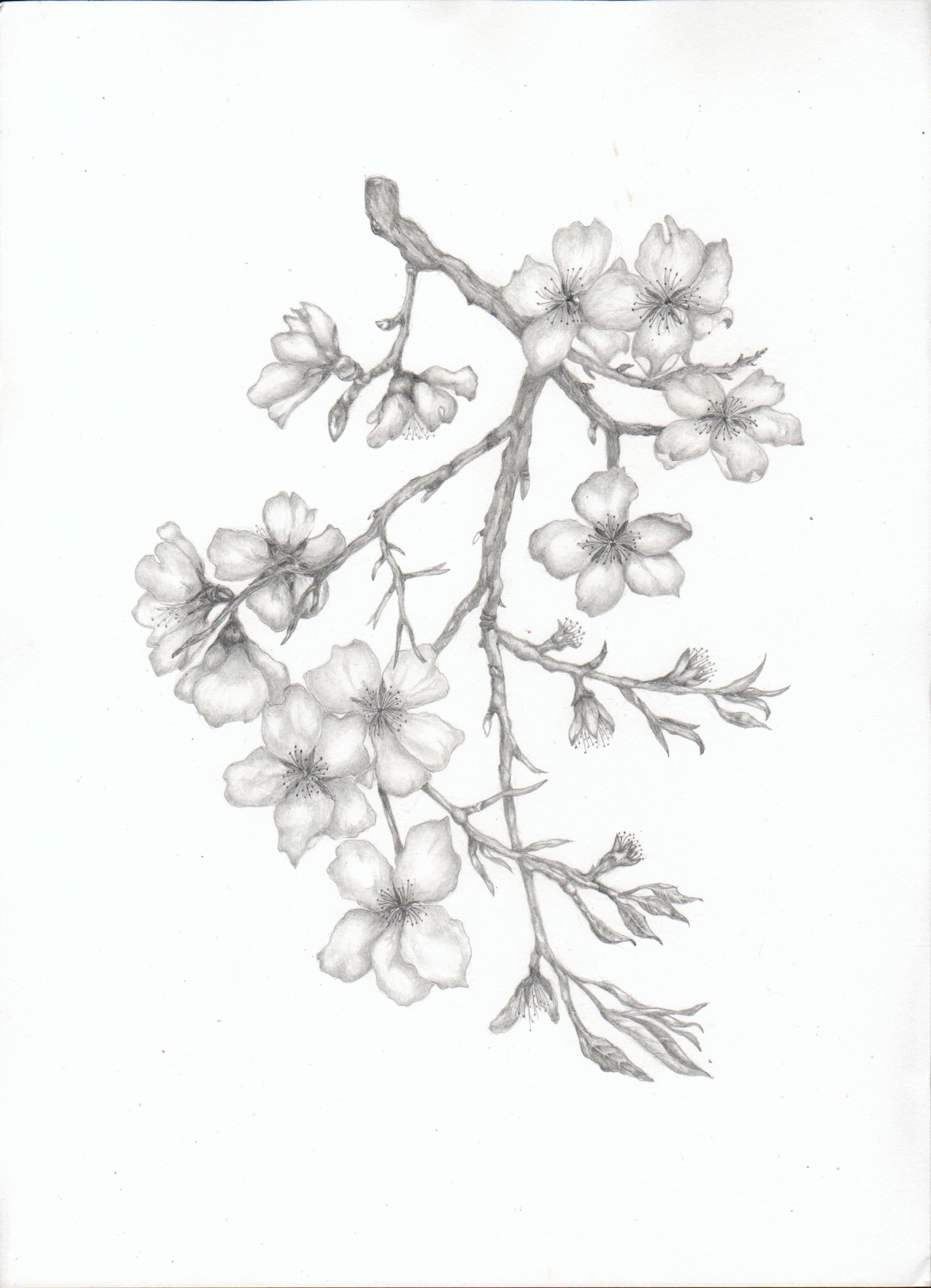 2335x3227 Almond Blossom Branch Tats Almonds, Tattoo And Tatting