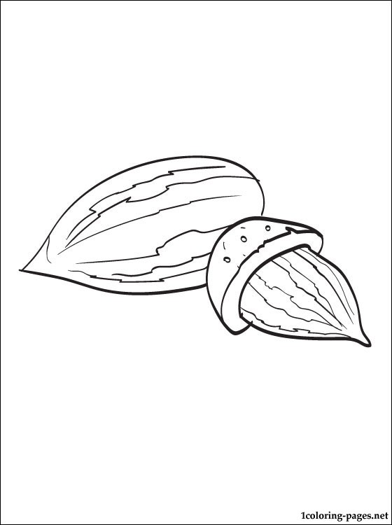 560x750 Almond Coloring Pages
