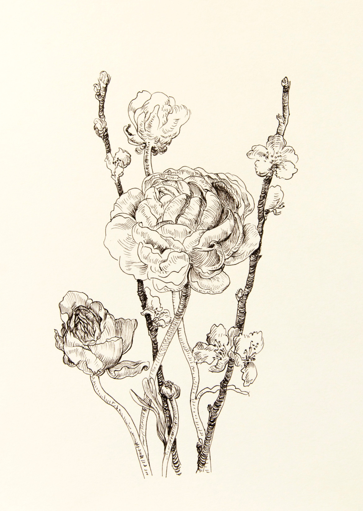 1170x1647 Ranunculus And Sakura Drawing