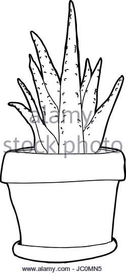 249x540 Aloe Vera Plant Hand Drawn Stock Photos Amp Aloe Vera Plant Hand