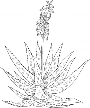 300x360 Aloe Vera Drawing Tattoos Aloe, Digi Stamps And Stamps