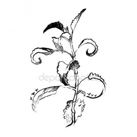 450x450 Aloe Vera Plant Hand Drawn Engraving Illustration On White