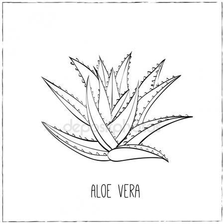 450x450 Aloe Vera Plant Stock Vectors, Royalty Free Aloe Vera Plant