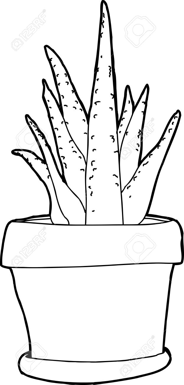 623x1300 Black Outline Drawing Of Aloe Plant Over White Royalty Free