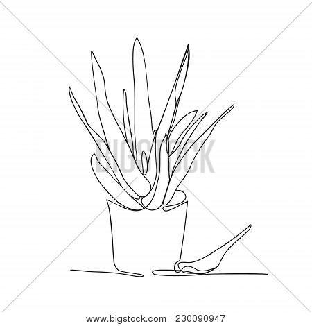 450x470 Aloe Vera Images, Illustrations, Vectors