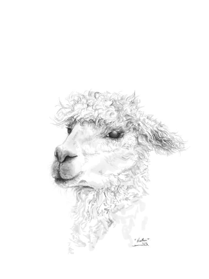 675x900 Heather Drawing By K Llamas