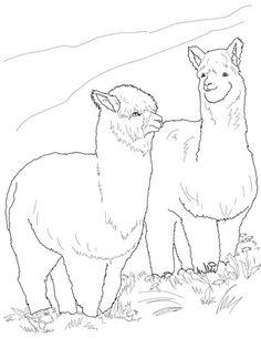 236x314 Alpaca Drawing Coloring Page Alpaca Farm Alpacas