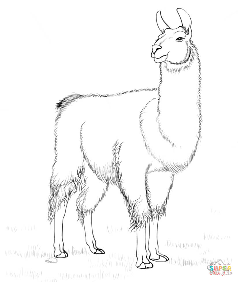 824x976 Llama Coloring Page Free Printable Coloring Pages
