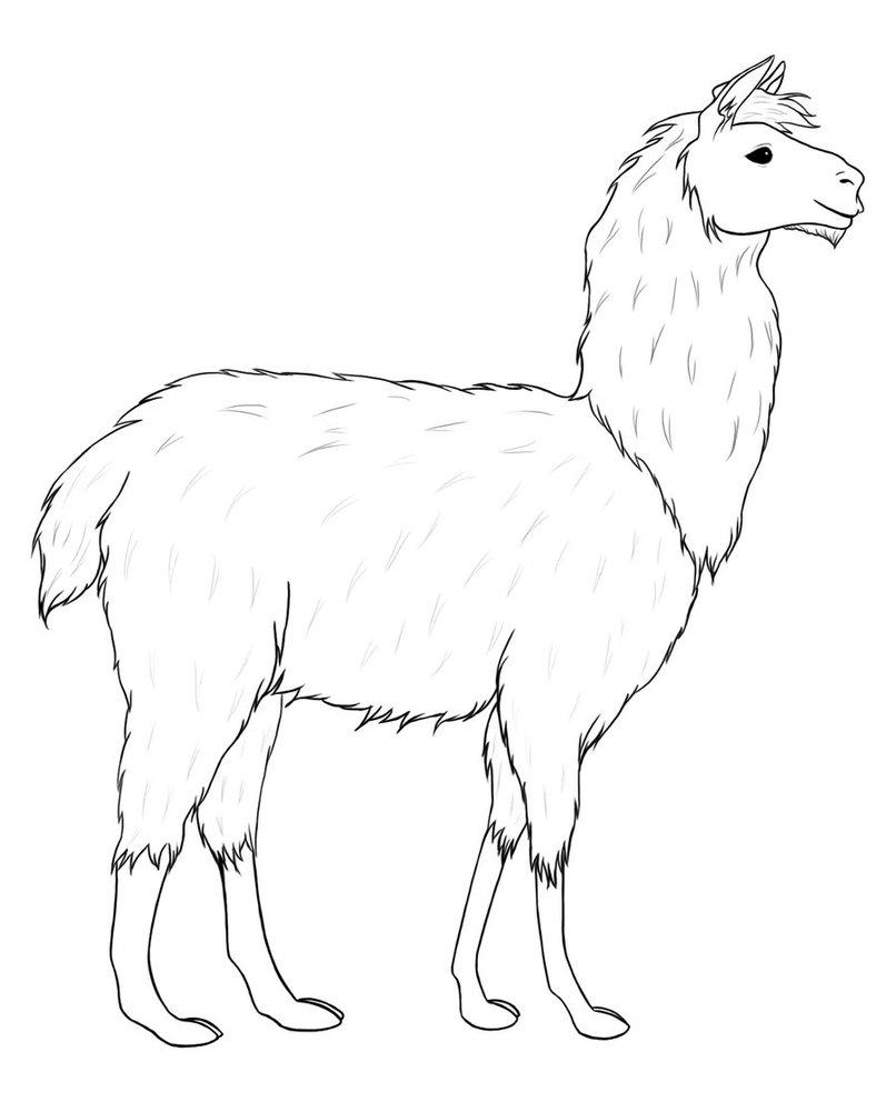 806x992 Llama Lineart By Morgensterna