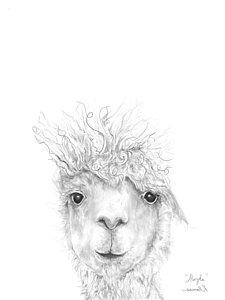 225x300 Alpaca Drawings