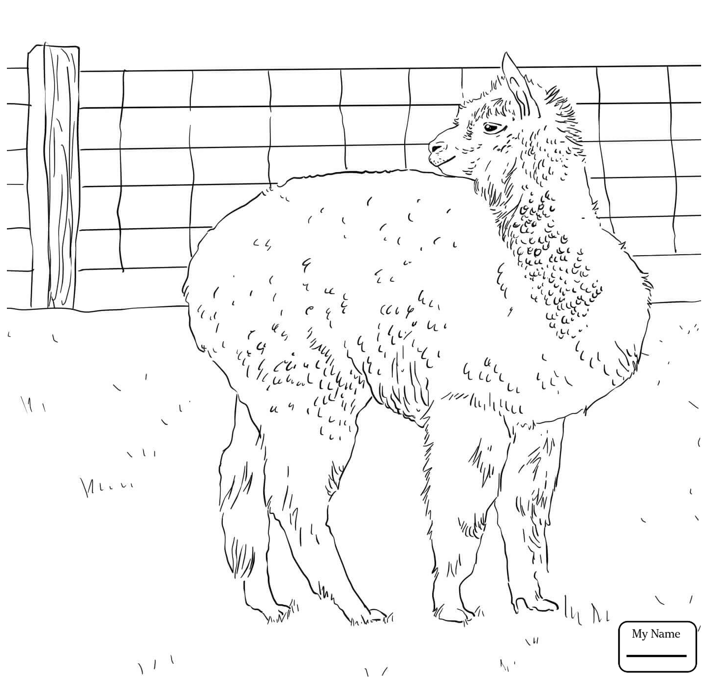 1440x1389 Coloring Pages Alpaca Looks Back Mammals