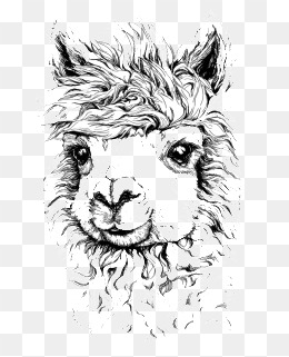 260x321 Alpaca Illustrator Png, Vectors, Psd, And Icons For Free Download
