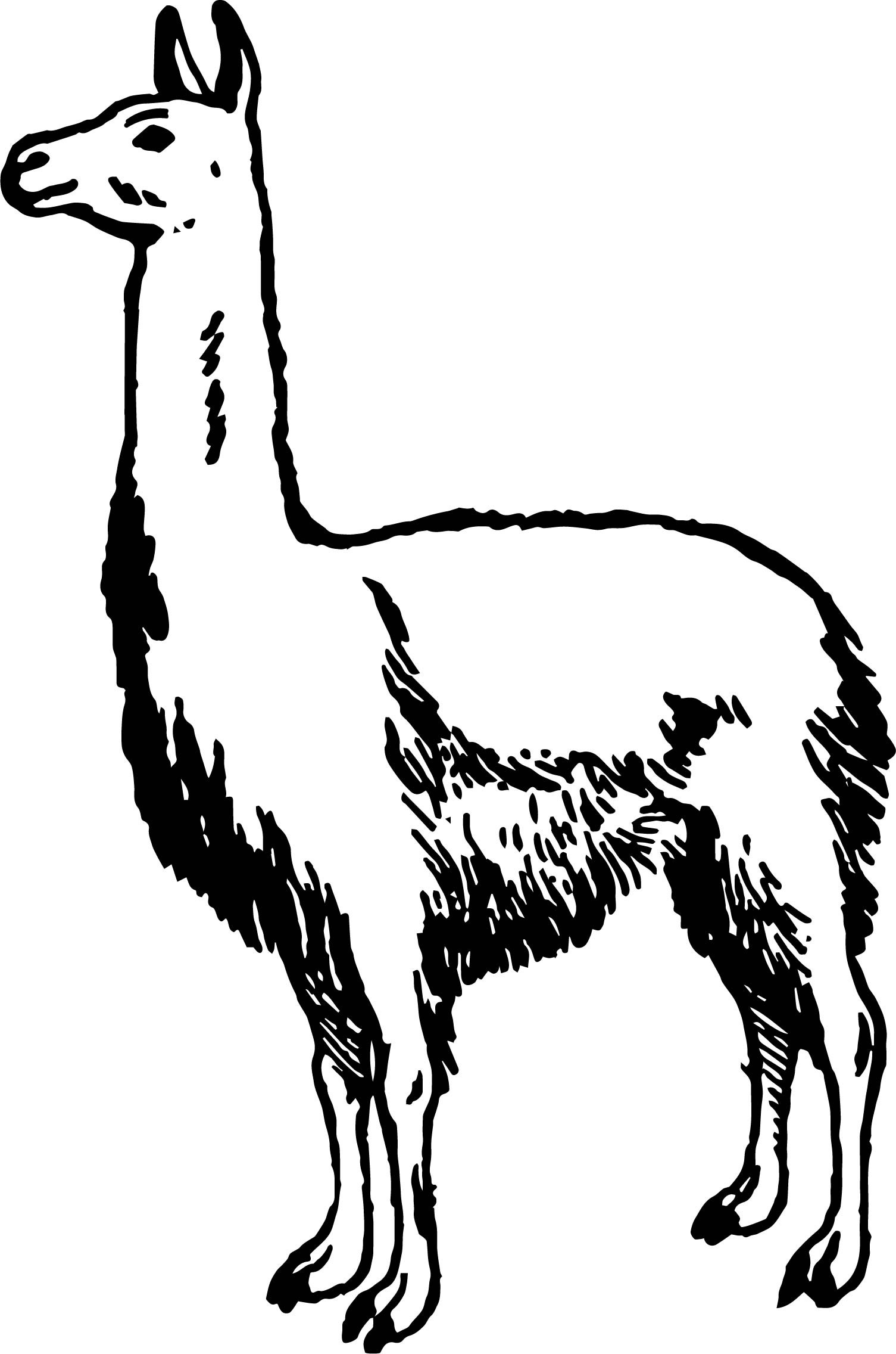 Alpaca Drawing Free At Getdrawings Com Free For Personal Use