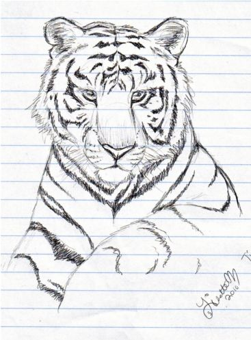 736x1076 gallery amazing simple drawing 367x497 gallery some sketches of tiger