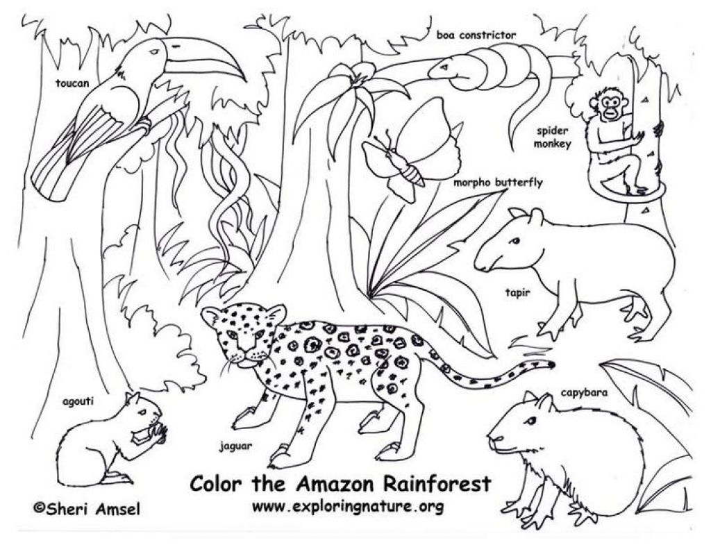 Amazon Rainforest Drawing