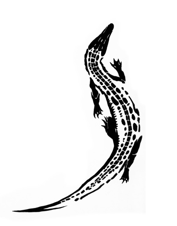 American Alligator Drawing