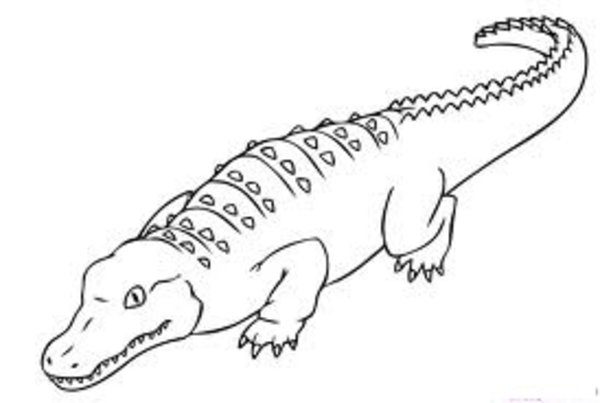 600x403 Alligator Coloring Pages