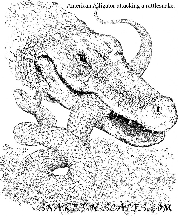 750x909 American Alligator Coloring Page