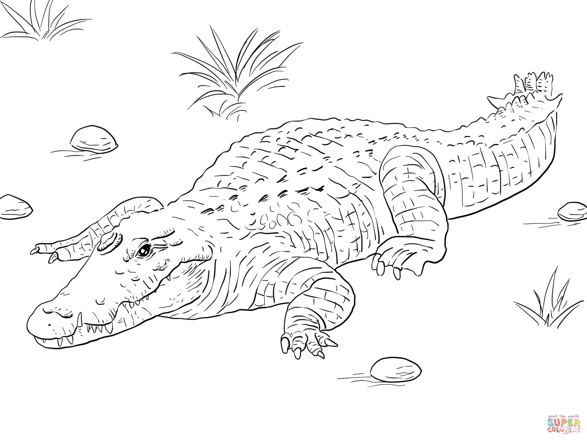 2048x1536 American Crocodile Coloring Page In Snazzy Draw Alligator