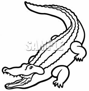 294x300 Crocodile Clipart Line Drawing