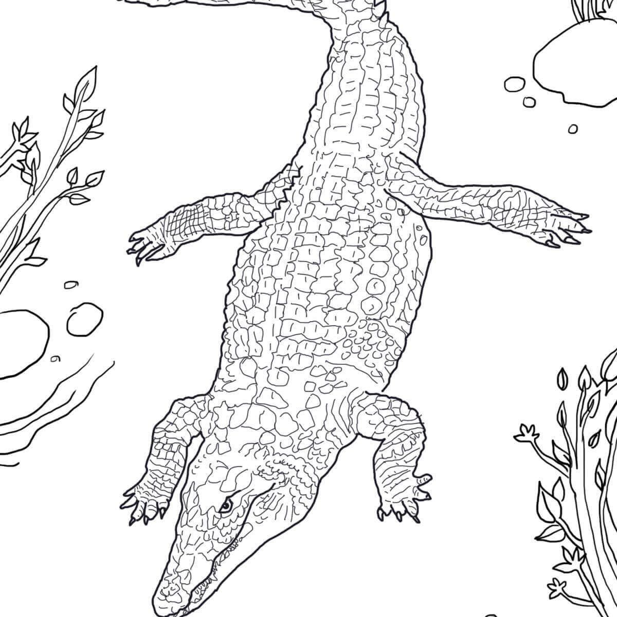 1200x1200 New Cartoon Crocodile Coloring Pages With Additional Page
