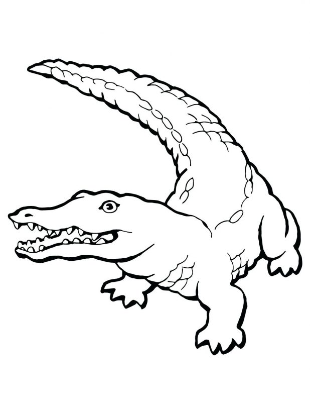 618x824 Pin Drawn Alligator Color 2 Coloring Pages Preschool Cute Baby